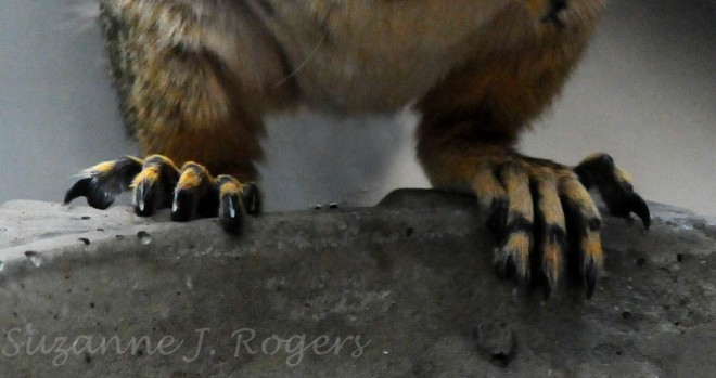 alien squirrel feet (1 of 1)